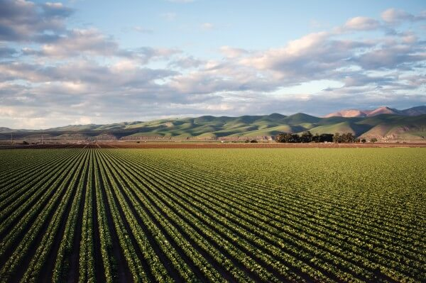 Advantages And Disadvantages of Irrigation